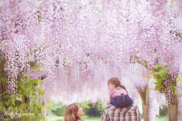 Sarah Gawler wisteria family shoot